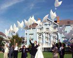 Купить БИО Воздушный Шар Свадебный Голубь